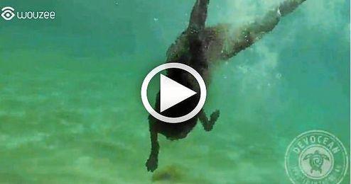 (VIDEO) El perro pescador