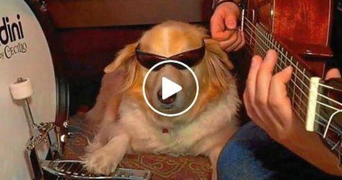 (VÍDEO) El perro que da compás a la guitarra de su dueño