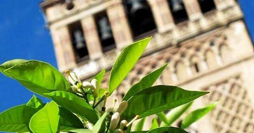 La primavera estará presente hasta el 20 de junio, cuando empiece el verano.