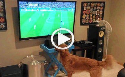 El perro futbolero, viral en las redes
