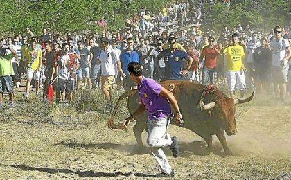 Toro de la Vega.