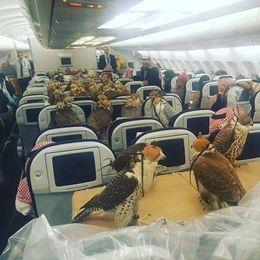 No sin mis halcones, la locura de un príncipe saudí
