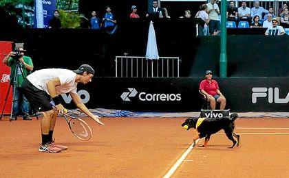 Perros abandonados se convierten en recogepelotas del Abierto de Tenis Brasil