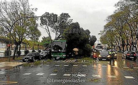 Imagen de unos de los árboles que ha caído en el Paseo Colón.
