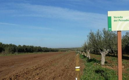 La Calderona, un paseo entre cereales, girasoles y olivos
