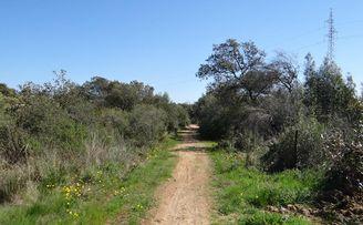 Camino de los arrieros: un sendero para todos los públicos en Gerena.